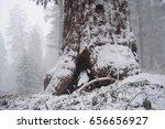 Impression of the Giant Sequoia