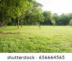 green trees during the morning... | Shutterstock . vector #656664565