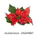 Christmas Flower Isolated On A...
