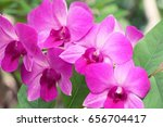 orchid in garden with nature | Shutterstock . vector #656704417