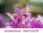 Purple Orchid  Queen Of Flower...