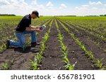 agronomist using technology in...   Shutterstock . vector #656781901