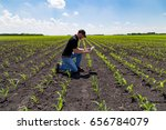 Agronomist Using Technology In...