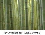Lush Green Japanese Bamboo...