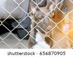 Thai Dog  In The Jail  Sad...
