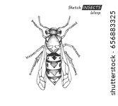 hand drawn ink sketch of wasp... | Shutterstock .eps vector #656883325