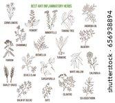 best anti inflammatory herbs.... | Shutterstock .eps vector #656938894
