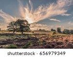 Nationaal Park Veluwezoom Heid...