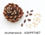 Stone Pine Cone With Seeds And...