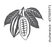 monochrome cocoa beans and... | Shutterstock .eps vector #657005971