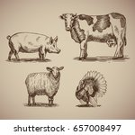 farm animals in sketch style... | Shutterstock .eps vector #657008497