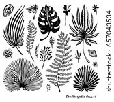 set of black doodle exotic palm ... | Shutterstock .eps vector #657043534
