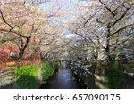 cherry blossom trees along... | Shutterstock . vector #657090175