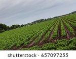 an intentional tilted shot of... | Shutterstock . vector #657097255
