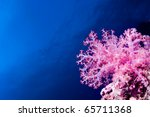 Glowing Pink Soft Coral...