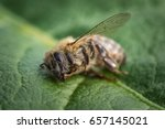 macro image of a dead bee on a