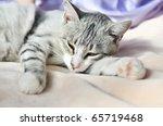Stock photo lazy gray cat dozing on the sofa 65719468