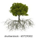 Tree With Root Isolated Over...