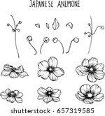 japannese anemone flowers... | Shutterstock .eps vector #657319585