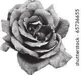 Halftone Rose In Vector Format