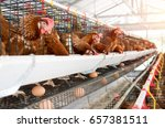 hen  chicken eggs and chickens... | Shutterstock . vector #657381511