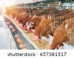 hen  chicken eggs and chickens...   Shutterstock . vector #657381517