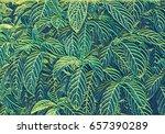 Tropical Foliage Plant Blurry...