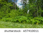 russia's expanses  forests ... | Shutterstock . vector #657410011