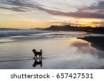 Stock photo small funny dog running by the bali beach at colorful sunset it reflected in water calm mirror 657427531