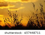 golden meadow | Shutterstock . vector #657448711