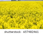 With Beautiful Yellow Flowers...