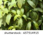 Tropical Foliage Plant Digital...