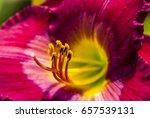 Pollen Of Tulip Flower On Soft...