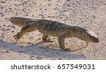 Small photo of Namibia, Etosha park, monitor lizard