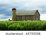 An aging wooden barn and a silo in the middle of a corn field. - stock photo