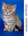 Stock photo british kittens on blue backgrounds 65759410