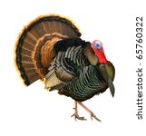 turkey tom strutting his stuff... | Shutterstock . vector #65760322