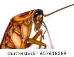 the close up photo of cockroach ... | Shutterstock . vector #657618289
