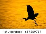 Great Heron Bird In Silhouette