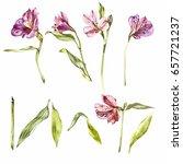 set watercolor illustrations of ... | Shutterstock . vector #657721237
