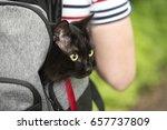 Domestic Black Cat In Backpack...