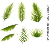 realistic tropical green palm... | Shutterstock .eps vector #657768034