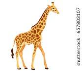 vector giraffe standing...   Shutterstock .eps vector #657803107