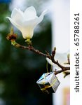White magnolia flower blooming on the branch - stock photo