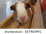 hamster close up | Shutterstock . vector #657903991