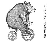 circus bear on bicycle vector...   Shutterstock .eps vector #657923371