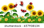 Ladybugs Flying In Sunflower...