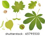 Green Leaves With Fruits. A...