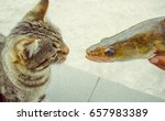 Cat And Fish. Funny Photo With...