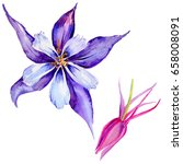 wildflower exotic flower in a... | Shutterstock . vector #658008091